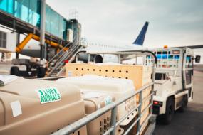 Aero Consulting Formations Aéronautique - Formation AVI - Acceptations Animaux Vivants - Objectifs détaillés : Le stagiaire sera capable de :    Répondre aux exigences de conformité et aux règlementations IATA Assurer la sécurité et la protection des anim