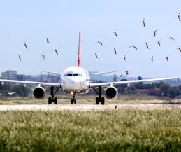 """Les conséquences du péril animalier : Aujourd'hui, 800 rencontres d'animaux sont enregistrées en France chaque année dans l'aviation civile.  À peu près 15% d'entre elles sont classées """"sérieuses"""". C'est-à-dire q"""