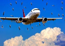 A qui se destine la formation Prévention du Péril aviaire et animalier dans le transport aérien : La formation se destine au personnel chargé de la prévention du péril animalier dans les aéroports