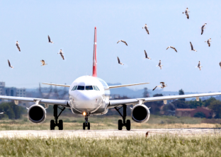 Aero Consulting Formations aéronautiques - Formation Prévention du Péril Animalier et du Péril Aviaire - A l'issue de cette formation, les stagiaires auront acquis les connaissances générales sur les sites aéroportuaires, les aéronefs et les espèces anima